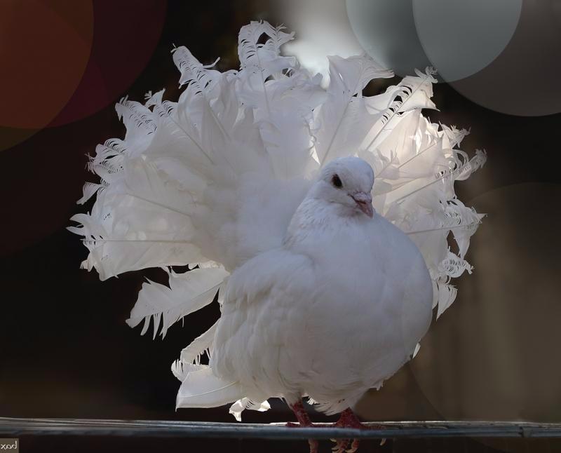κακό πουλί ερασιτεχνικό σεξ βίντεο σωλήνα