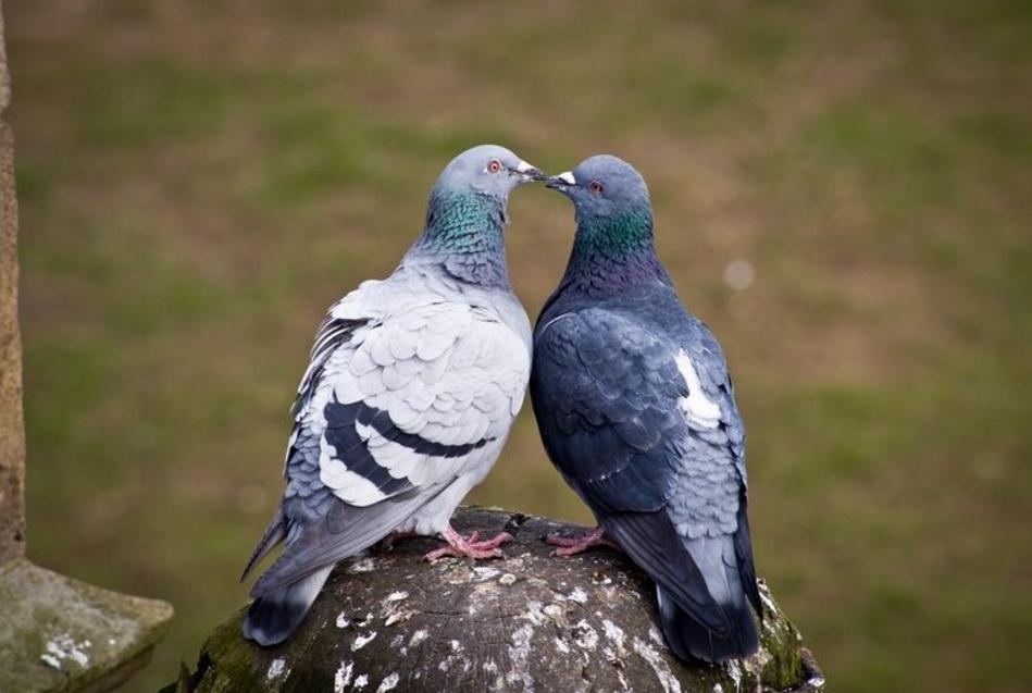 αρσενικό γκέι ομαδικό σεξ