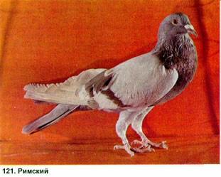 μεγάλο μακρύ μαύρο πουλί γαμημένο το καβλί μου φωτογραφία
