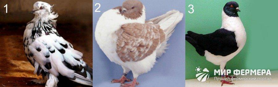 γίγαντας μακρύ πουλί τις καλύτερες τεχνικές πίπα