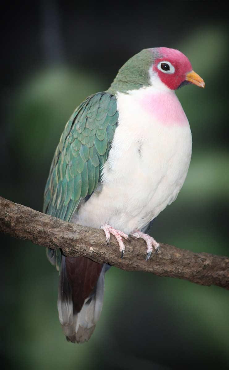 Papağan ne kadar süredir esaret altında yaşıyor
